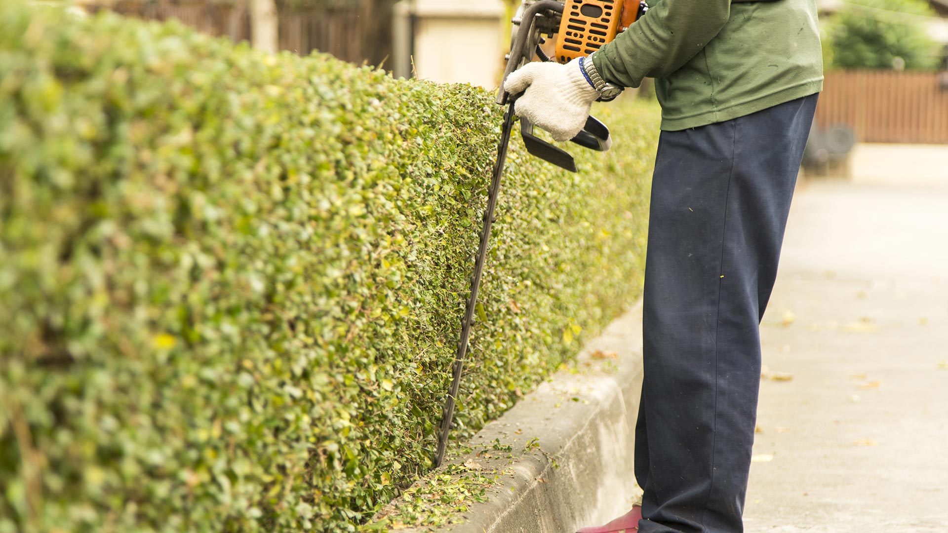 Landscape worker trimming hedges with electric shears in Grand Rapids, MI.