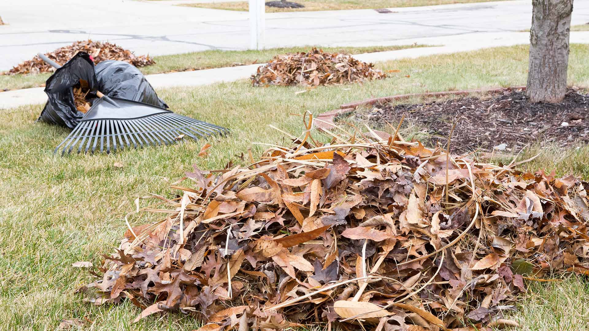 Piles of leaves being cleared and bagged for disposal in Grand Rapids, MI.