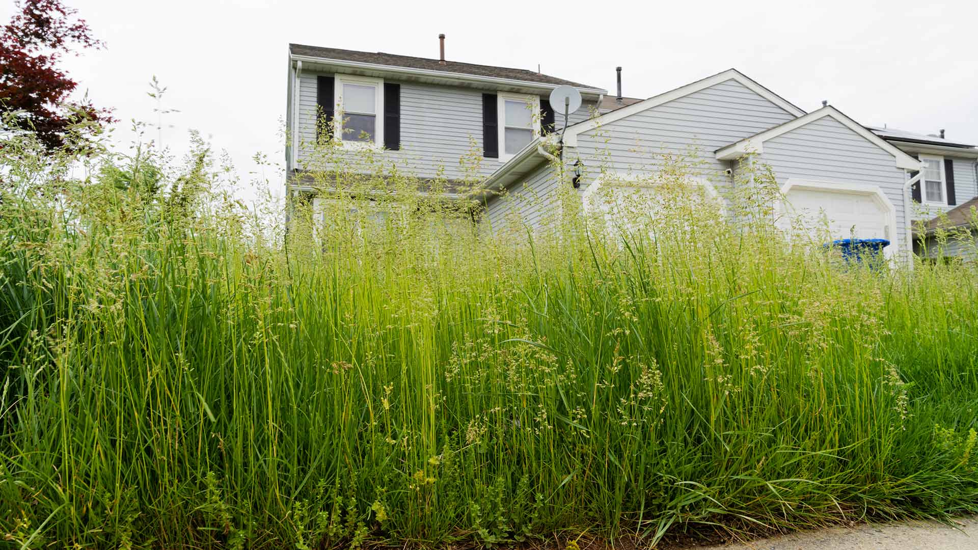 Residential home lawn overgrown with tall grass in Ada, MI.