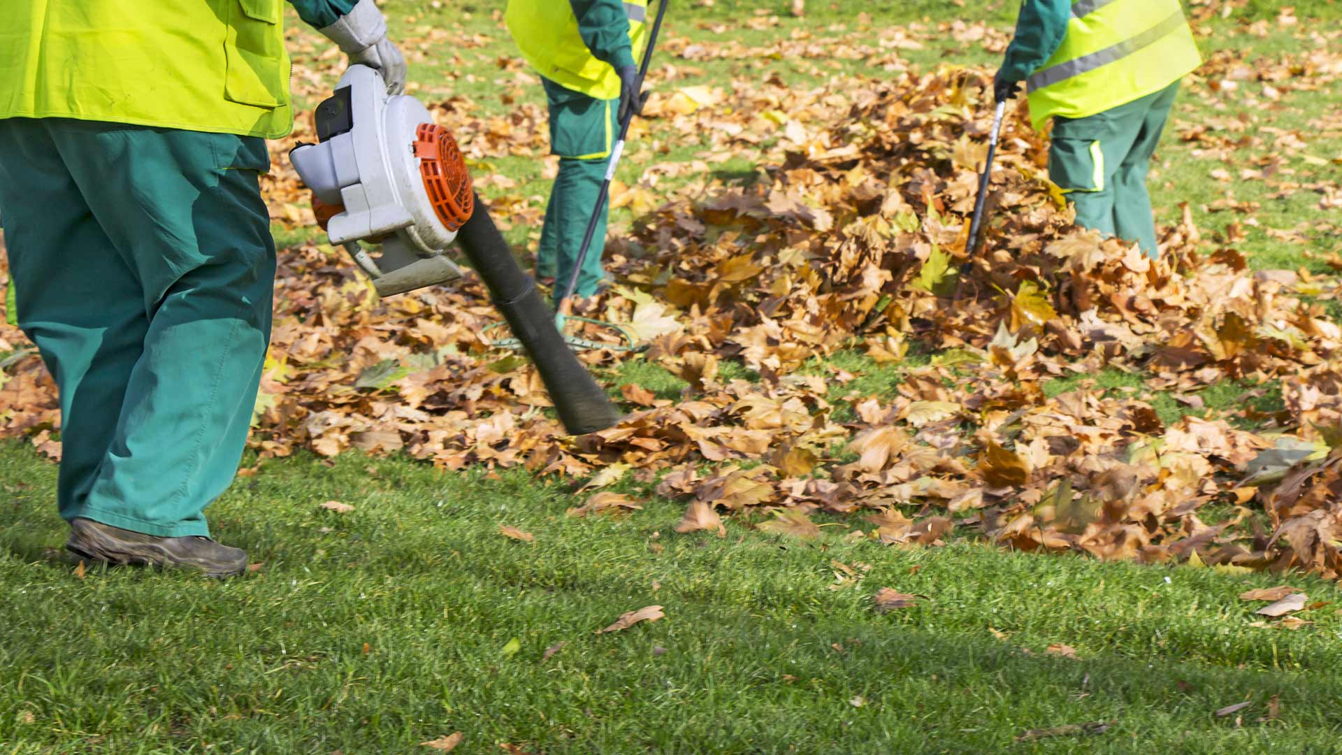 Landscape workers clearing yard of fall leaves in Cascade, MI.
