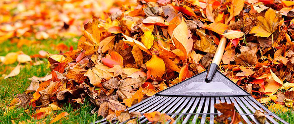 Why Your Yard Benefits from Leaf Removal Services