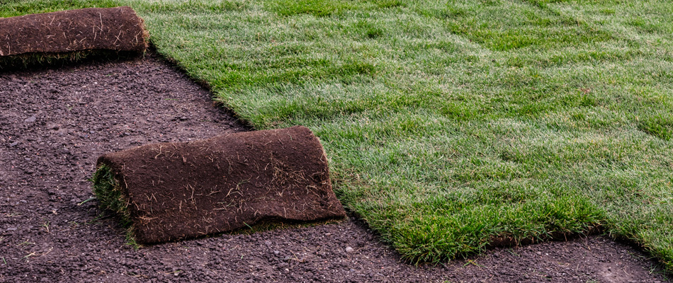 How Your Grand Rapids Yard May Benefit from New Sod