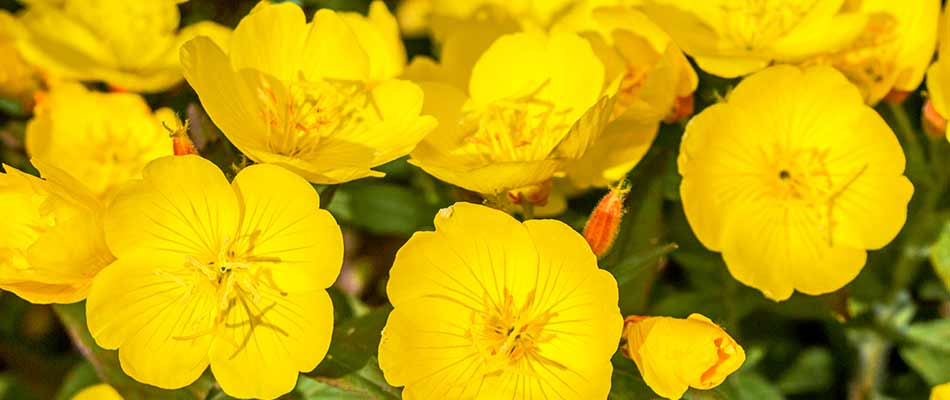 4 Frost-Tolerant Annuals to Plant During a Spring Cleanup