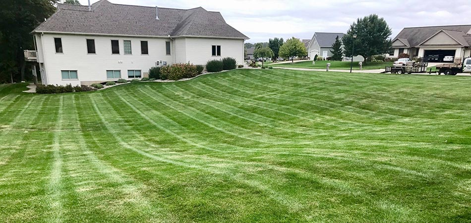 Freshly mowed lawn in Grand Rapids, MI.