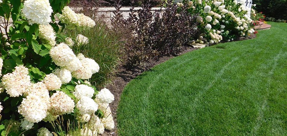 Perfectly mowed yard with beautiful white flowers and bushes on retaining wall.