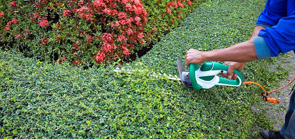 Landscape worker trimming shrubs with electric shears in Cascade, MI.