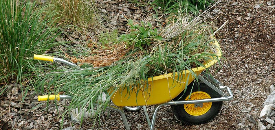 Wheelbarrow clearing yard of brush and overgrowth.
